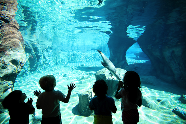Fresno Chaffee Zoo Recieves National Award